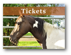 Image of horse and EIFF Tickets button